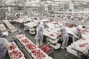 1.500 tấn thịt lợn Nga đổ bộ vào Việt Nam, sẽ phân phối ở đâu?