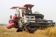 Sau đề xuất tiếp tục xuất khẩu gạo: Thị trường lúa gạo lại sôi động
