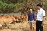 Đồng vốn Agribank tiếp sức, nông dân Phù Yên trở thành triệu phú