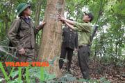 Những bước chân giữ rừng ở Mộc Châu