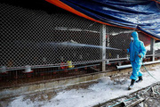 11 tỉnh, thành phố xuất hiện dịch cúm gia cầm