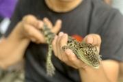 Chơi với lạc đà, cá sấu, rắn, cóc... ở sở thú mini giữa Sài thành