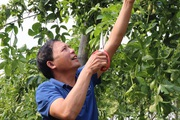 Liên kết trồng chanh leo, nông dân Sơn La lãi trăm triệu đồng mỗi năm
