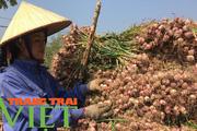 Hội Nông dân Yên Châu: Điểm tựa giúp hội viên phát triển kinh tế