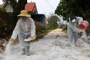 Mất 100.000 con gia cầm vì cúm, lên kịch bản nCoV lan trên động vật