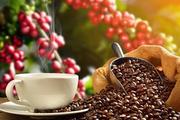 Tiêu, cà phê chững giá sau chuỗi giảm sâu
