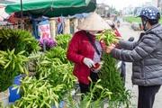 Hoa loa kèn được mùa nhưng ít người mua do ảnh hưởng của dịch Covid-19
