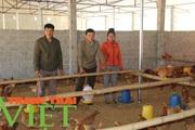 Hội Nông dân Sơn La: Cầm tay chỉ việc, giúp hội viên phát triển kinh tế