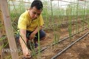 """Điện Biên: Giâm """"cây lạ"""" ở nhà lưới, dân hỏi trồng cỏ gì thế, bảo là """"rau hoàng đế"""""""