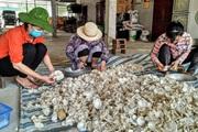 Lão nông Nghệ An trồng 3 loại nấm gì mà cho thu nhập 800 triệu mỗi năm?