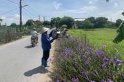 Độc đáo mô hình đường hoa, hàng cây nông dân ở Gia Lâm