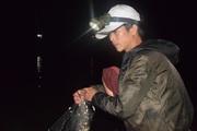 Săn cá bống ở hồ Phú Ninh