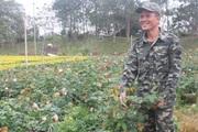 Giữ thương hiệu cho làng hoa Xuân Quan