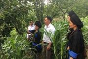 Sìn Hồ mở hướng giảm nghèo từ cây trồng mới