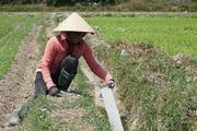 Đất nông nghiệp bỏ hoang vì thiếu nước