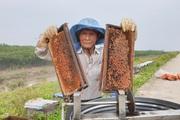 """Ninh Bình: """"Tướng"""" 84 tuổi đưa cả triệu """"quân"""" ra biển làm thứ mật lạ"""