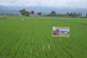 Điện Biên: Hiệu quả từ dự án dồn điền, đổi thửa ở Thanh Hưng