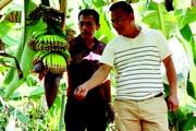 Đánh liều phá cà phê trồng chuối Laba, được khách Nhật Bản kí hợp đồng mua liền 5 năm