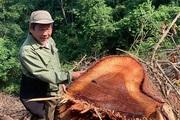 Bắc Kạn: Ngang nhiên chặt hạ, xẻ gỗ trên đất lâm trường