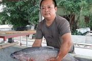 """Nam Định: Giàu lên nhờ nuôi thêm cá """"khủng"""""""