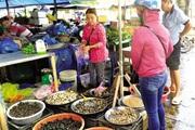 Ốc bươu đen đặc sản giá cao chót vót, bán hút hàng, người mua ăn tới tấp