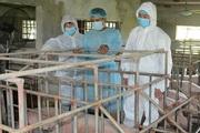 Nam Định: Nhập lợn ông bà, phục vụ tái đàn