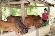 """Sơn La: Trang trại """"thập cẩm"""", trồng cây gì cũng nhiều trái, nuôi con gì cũng mát tay"""