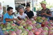Khánh Hòa: Trung Quốc giảm mua, xoài Úc gặp khó