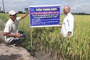 Chỉ cần gieo sạ 80kg lúa giống/ha, nông dân tiết kiệm hẳn 1,6 triệu đồng, thu lợi đơn lợi kép