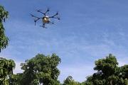 Phun thuốc bảo vệ thực vật trên cây xoài bằng thiết bị bay không người lái