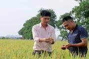 Chàng trai Hà Nội trở thành ông chủ hàng trăm hecta lúa