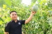 """Quảng Bình: 8X bỏ làm cán bộ, về làng """"cắm"""" sổ đỏ, trồng dưa lưới, kiếm vài trăm triệu/năm"""