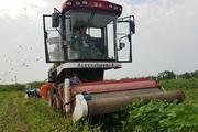 Thuê hàng nghìn hecta trồng đậu tương rau xuất khẩu