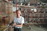 """Thái Bình: Cụ thương binh cụt 1 chân, 85 tuổi vẫn """"nuôi đủ thứ con"""", vợ ngày nào cũng có tiền"""
