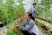 """Đến """"Nhịp cầu nhà nông"""", nông dân hết băn khoăn thắc mắc, nuôi trồng hiệu quả hơn"""