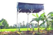 Hậu Giang: Từ mảnh vườn khuất sau nhà, làm chuồng nuôi dơi bé tí tẹo mà cũng có 50 triệu