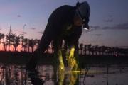 Nắng nóng cao điểm, nông dân soi đèn đi cấy đêm ở Hà Nội