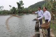 Vay vốn đầu tư nuôi cá, nông dân Hải Dương thu nhập khá