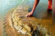 Kỳ bí ngôi đền cổ 500 tuổi bị nhấn chìm cách đây 200 năm, bất ngờ xuất hiện giữa sông