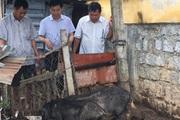 Ninh Thuận: Phó Chủ tịch Hội NDVN thăm mô hình nuôi heo đen đặc sản Lũng Pù