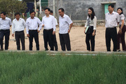 Ninh Thuận: Trồng hành tím dùng công nghệ tưới nhỏ giọt, cây vẫn xanh tốt dù nắng hạn gay gắt