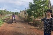 Gia Lai: Vườn bơ năm nào cũng sai trĩu quả, vẫn đào bỏ hiến hơn 1.500m2 đất cho làng làm đường