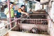 Khánh Hòa: Nuôi động vật rừng-1 thời nóng sốt tôn lên đặc sản nay buồn thiu thế này