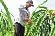 Quốc hội thông qua EVFTA: Nông sản Việt mừng gì, lo gì?