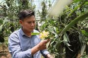 Làng hoa Xuân Quan: Xây nhà lầu nhờ hoa