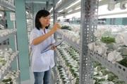 Nông nghiệp TP.HCM: Đầu tư mạnh giống cây trồng chất lượng cao