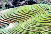 Ruộng bậc thang - bức tranh nghệ thuật đẹp đến nao lòng nơi vùng núi Sơn La