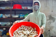 Kỳ thú theo chân các cần thủ câu cá đục cực ngon ở biển Minh Châu
