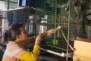 Phú Yên: Nuôi loài thú vốn là động vật quý hiếm, dân cứ bán 1 con thu 5 triệu đồng