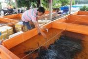 Kỹ sư công nghệ thông tin đam mê nuôi lươn đồng